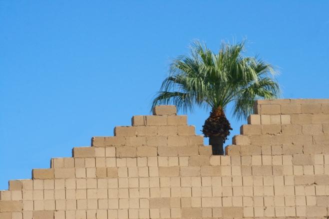 Phoenix Phoenix