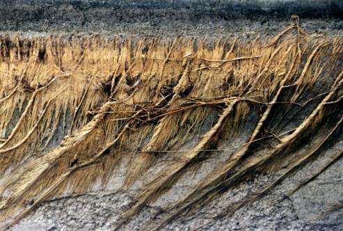 Wyoming Irrigation 1